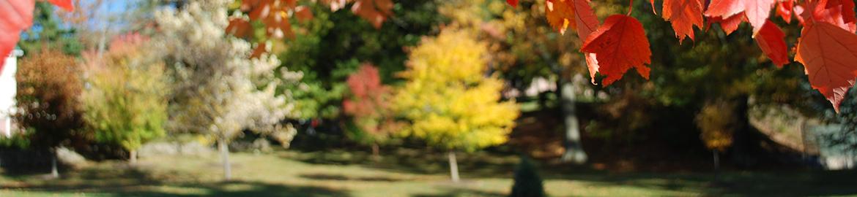 Autumn in the Mont Alto Arboretum