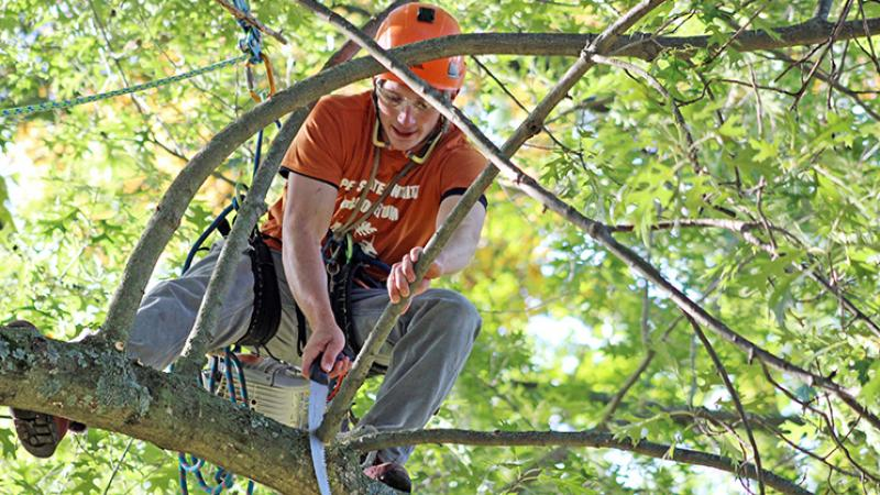 Arbor Day Student in Tree with Saw